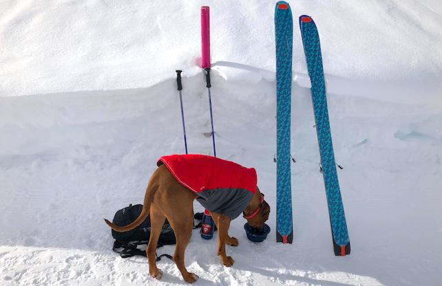 Dog Ski | Welove2ski