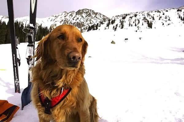 Snow Dogs | Welove2ski
