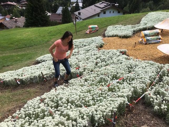 Edelweiss | Welove2ski
